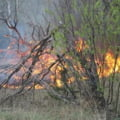 Incendiu puternic langa centrala de la Cernobil: Au crescut emisiile radioactive? E Romania in pericol?