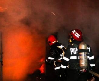 Incendiul in care au murit 11 animale de la circ ar fi pornit de la un calorifer defect