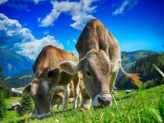Incepe recensamantul agricol. Pe baza lui va fi facut Planul National Strategic 2023 - 2027