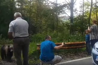 Inconstienta fara limite: Si-au pus pana si copilul sa faca selfie cu ursul pe Transfagarasan (Video)