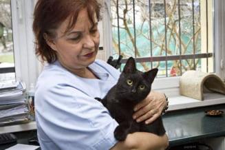 Incredibila poveste a pisicii-infirmiere: A fost la un pas de moarte, iar acum este cel mai bun terapeut (Galerie foto)