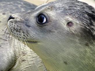 Indignare în Grecia după uciderea cu harponul a unei foci în insula Alonissos