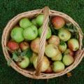 Inedit despre mere: cum musti din fruct ca sa nu faci risipa si cat aer contine (Video)