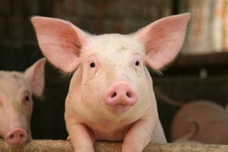 Inghititorul de porci (Opinii)