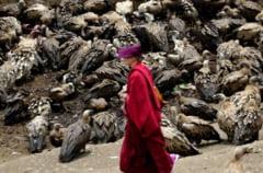 Inmormantari in Tibet: trupurile, oferite drept hrana vulturilor (Galerie foto)