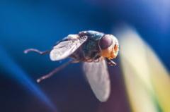 Insectele, sursa majora de imbolnavire. Iata ce bacterii poarta 9 din 10