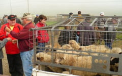 Inspectorii APIA incep controalele la fermierii care au cerut subventii pentru animale