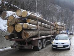 Institutiile statului protejeaza mafia lemnului de la Tulnici