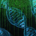 Interpolul se doteaza cu o baza de date familiale ADN in vederea identificarii unor persoane date disparute