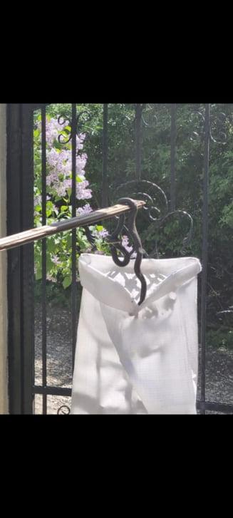 Interventie a jandarmilor din Ploiesti pentru indepartarea unor serpi aflati in apropierea locuintelor FOTO