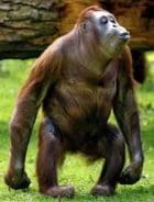 Intr-o rochie frumoasa si maimuta este atragatoare !