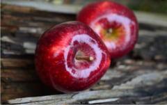 Intra pe piata merele care rezista un an