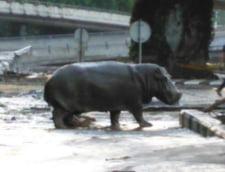 Inundatii grave in Georgia: Lei, ursi si un hipopotam, pe strazile Capitalei (Galerie foto & video)