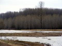 insemnate inregistrate in ultimele zile, pe raza comunei Tarna Mare