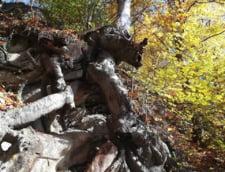 Iohannis a promulgat legea care da unda verde mineritului in arii protejate. USR anuntase ca o contesta la CCR