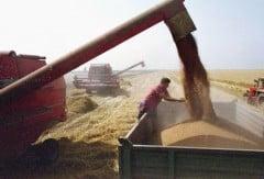 Irakul a cumparat 200.000 de tone de grau din Romania