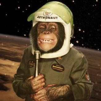 Iranul va trimite o maimuta in spatiu