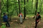 Iubitorii de natura pot admira padurea de stejar pufos de la Miraslau