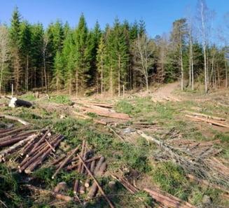 Justitie ineficienta: Padurile dispar copac cu copac, vinovatii scapa fara mari batai de cap