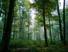 Klaus Iohannis a promulgat legea care aduce modificari Codului silvic. Vehiculele folosite la transportarea lemnului taiat ilegal pot fi confiscate