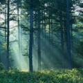 Korodi vrea sa opreasca taierile ilegale de paduri