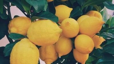 Lămâi importate din Turcia, depistate cu doze mari de pesticide. Consumul poate produce boli ale ficatului