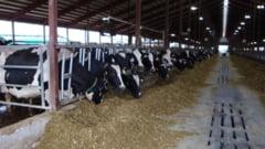 """LA DURUSA - Zootehnie pe fonduri europene. Fermierul este beneficiarul unui proiect pe masura 112 """"Instalarea tinerilor fermieri"""""""