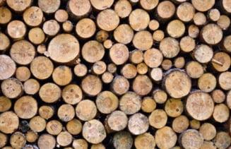 La ce pret a ajuns metrul cub de lemn in judetul Giurgiu?