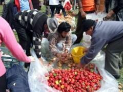 La targ la Asuaj - Cununi de cepe si muzica populara