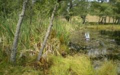 Lacul Balbaitoarea, locul blestemat unde creste unica floare carnivora din Romania. Miracolul natural tulburator