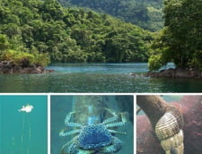 Lacul Matano ape adanci Indonezia