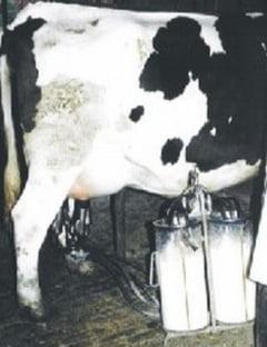 Lapte stricat si contrafacut in pietele Obor si Delfinului