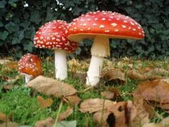 Cum creează ciupercile halucinogene acele stări speciale?