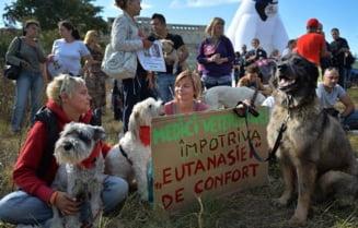Legea cainilor maidanezi si protestele de la Bucuresti, in presa straina
