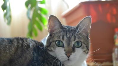 Legea pentru caini si pisici - bun simt si zero sanctiuni