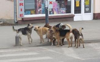 Legea privind cainii vagabonzi, adoptata - vezi in ce conditii pot fi eutanasiati