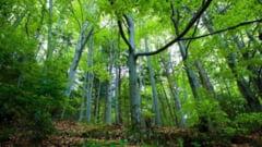 Liber la drujba in Cosava Mica. 700 de hectare de padure virgina, scoase din pix de pe lista UNESCO