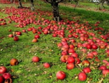Livezile romanesti de mere vor rodi financiar in curtea scolilor