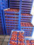 Locuri de munca Germania Agricultura (Capsuni & Zmeura)
