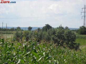 Lovitura de mediu: Biocombustibilul din porumb nu e chiar asa de... bio
