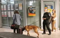 Lucian Bode: Extindem proiectul privind depistarea persoanelor cu COVID-19 cu ajutorul câinilor dresaţi