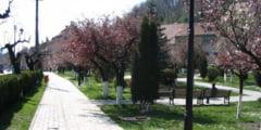 Lucrari de amenajare si intretinere a spatiilor verzi din Sighisoara