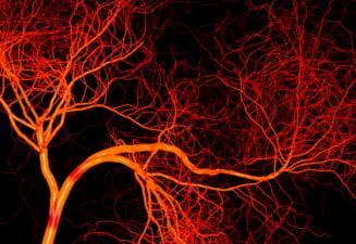 Lungimea uluitoare a vaselor de sange din corpul uman. Comparatia de necrezut cu circumferinta Pamantului