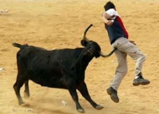 Lupte cu tauri, interzise in Franta