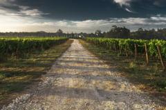 MAE: 28 de romani care lucreaza la o ferma din Herefordshire, Marea Britanie, au fost testati pozitiv pentru COVID-19