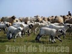 MOZAIC STIRI ECONOMICE: Crescatorii de animale se declara in pragul falimentului