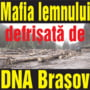 Mafia lemnului defrisata de DNA Brasov