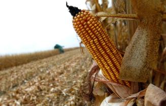 Mai este biocombustibilul o solutie pentru intreaga lume?