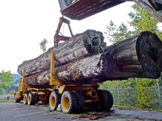 Mai multe ONG-uri de mediu atrag atentia asupra modificarilor Codului Silvic ce se dezbat luni in Parlament