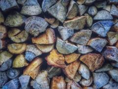 Marile companii care vand masa lemnoasa, amendate cu 26,6 milioane de euro de Consiliul Concurentei